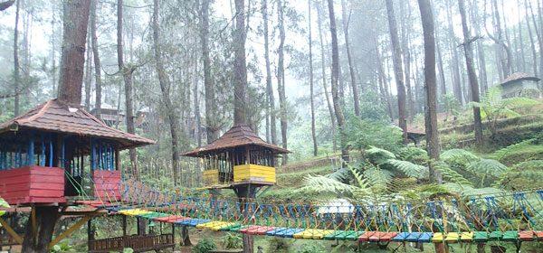 Taman Grafika Cikole Hayu Piknik Travel